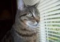 catgirl527