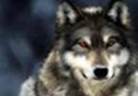 Wolfofnight