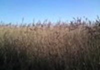 MarshMating