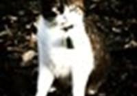 iphonecat749804