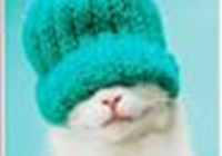 crankycat