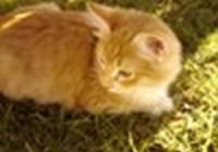 twinkiethecat