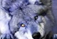 Howling_Alpha