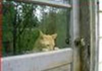 catladymac