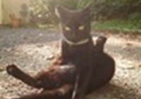 Mol_Cat