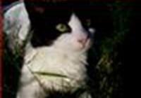 kittykattcandace