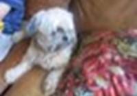 puppylover90987