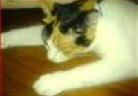 Shadowcat117
