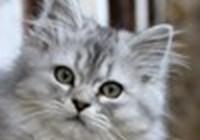 sven_the_cat