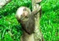 slothy21