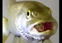 fishja