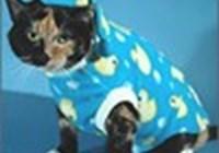 CatsinPajamas