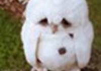 Owllover152