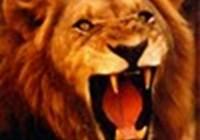 LionheartG