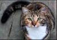 Funnycat6789