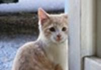 kittenlover74