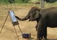 elephantwray