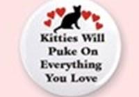 KittyShi