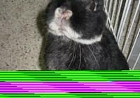 bunnylover726