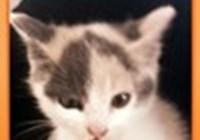 kitty.caat.14