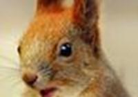SquirrelShaman