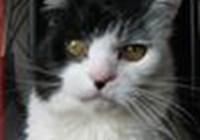 Annecat