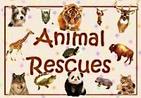 AnimalRescues avatar