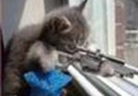 gatitobandito