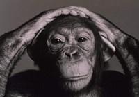 monkeylover.com
