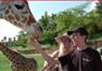 Velociraptor1313