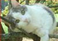 meow-meow33