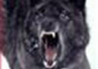 Queen-Wolfie