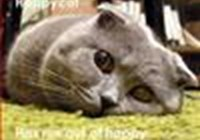 graycat85