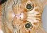 chizburgercat