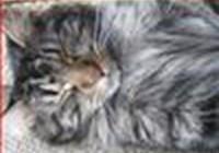 Kittycat1014