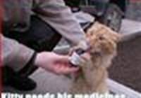 dahousecat