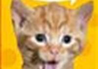 Catsownyou