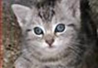 Kitty_cat_luva