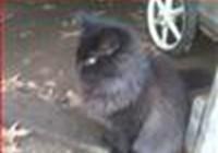 Mitsubachicats avatar