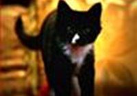 miss_kitty_fantastico