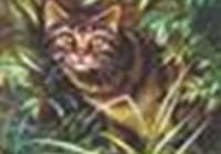 TigerStar96