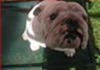 Cordog
