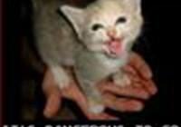 cattail77