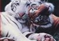 tigrgrl97