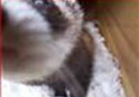 pootlebry avatar