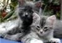 Kitty512