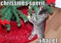 kitty978