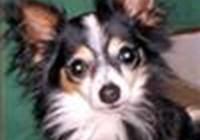 myguido avatar