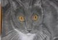 Renaedactldy avatar