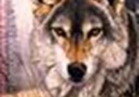 wolflupus